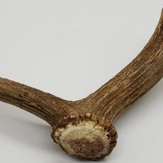 Horn, Geweih