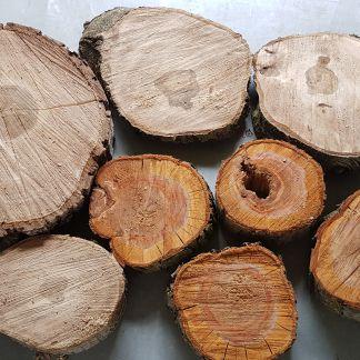Brett-Stammabschnitte, und Baumscheiben